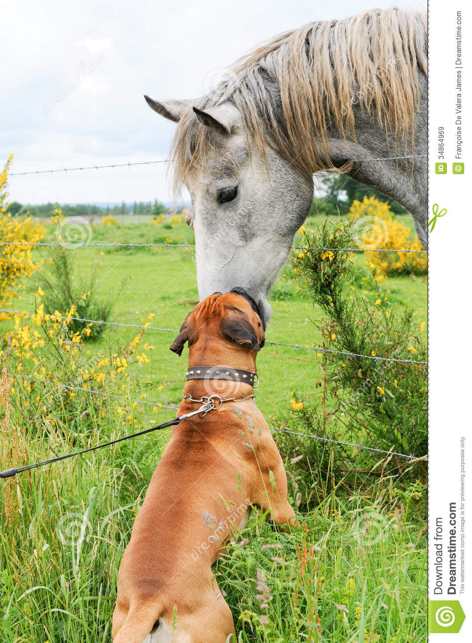 Royalty Free Stock Images Boxer Dog Making Friends Horse Purebred Leash Countryside Image34864969 moreover Store Categories Ministry Sets 666100 further Portable Puppet Theater besides Childrens Worshiptheatre Set moreover 11 Manualidades Que Puedes Hacer Con Palitos De Paleta. on puppet house plans