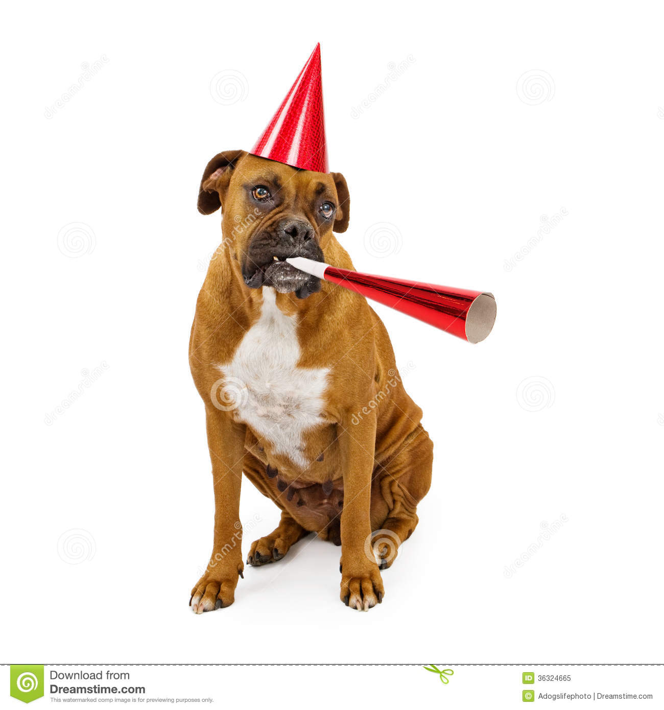 Boxer Dog Party Hat And Horn Royalty Free Stock Photo
