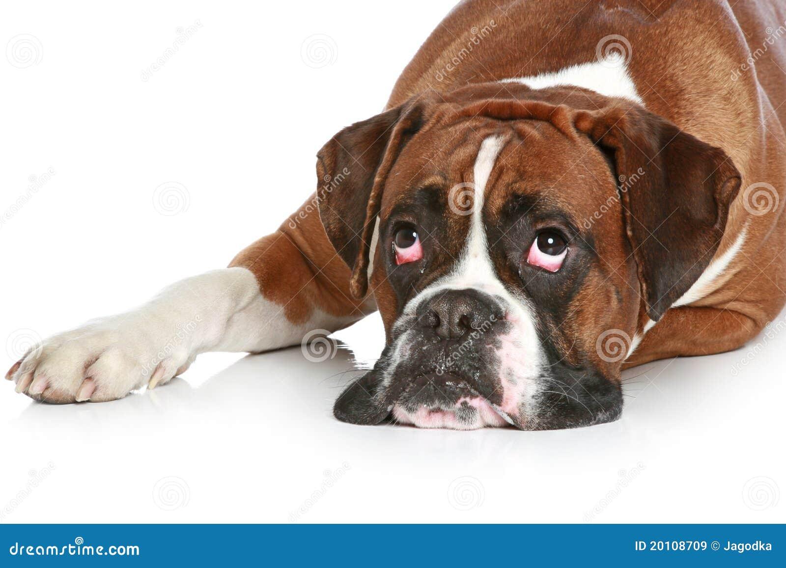 Sad Puppy Dog Lip