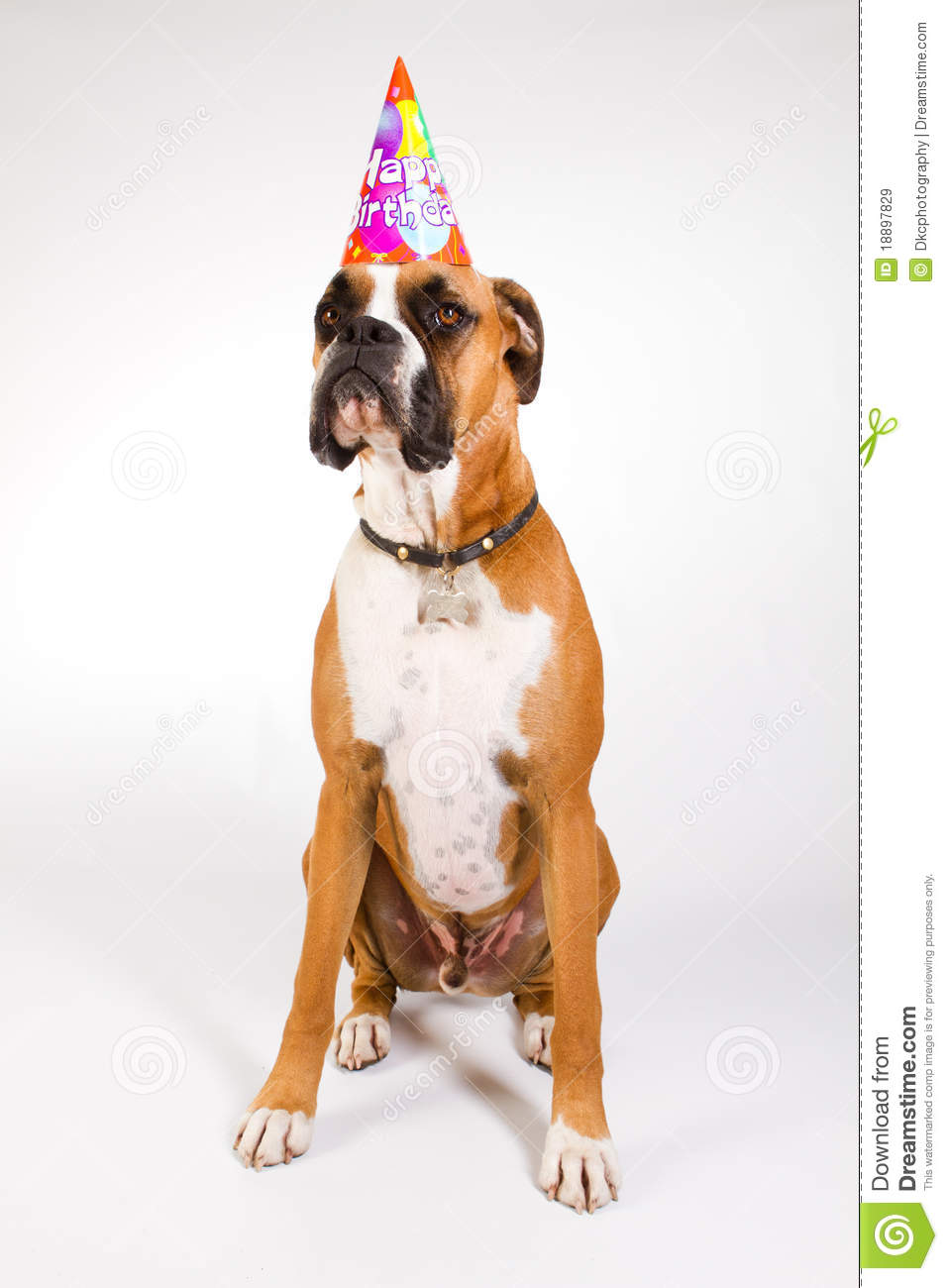 Boxer Dog Wearing A Happy Birthday Party Hat