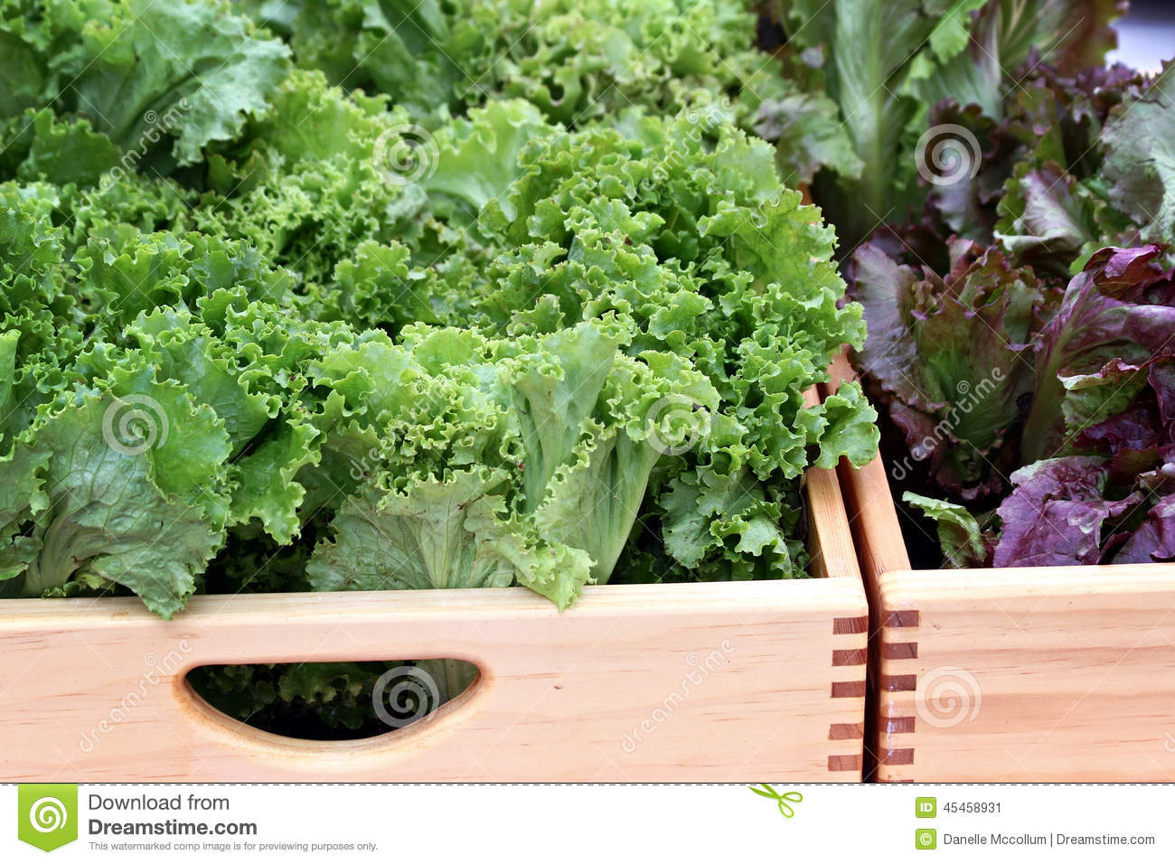 Boxes of Lettuce