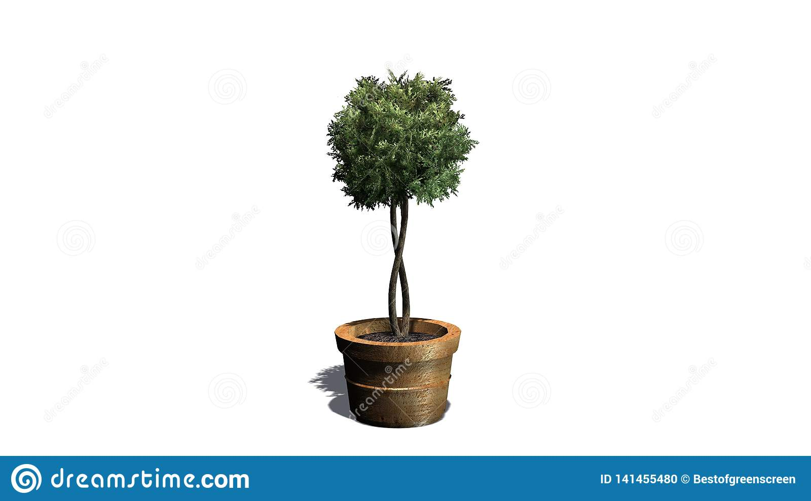 Boxwood Topiary In A Planting Pot With Shadow On The Floor Stock Illustration Illustration Of Background Boxwood 141455480