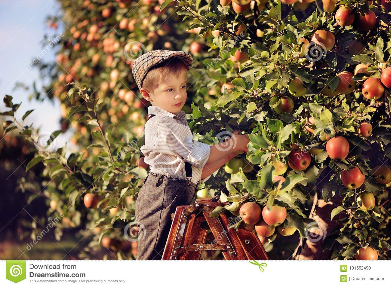 A Boy In An Apple Orchard Stock Photo Image Of Armchair 101552490