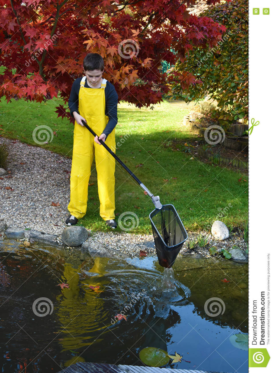 Boy cleaning garden pond stock photo image 79834853 for Garden pond cleaning nets