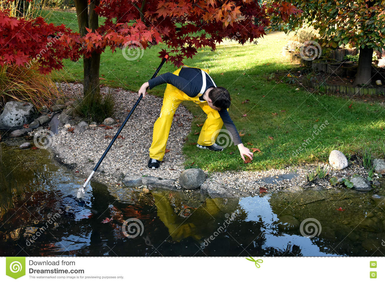 Boy cleaning garden pond stock photo image 79834904 for Garden pond cleaning