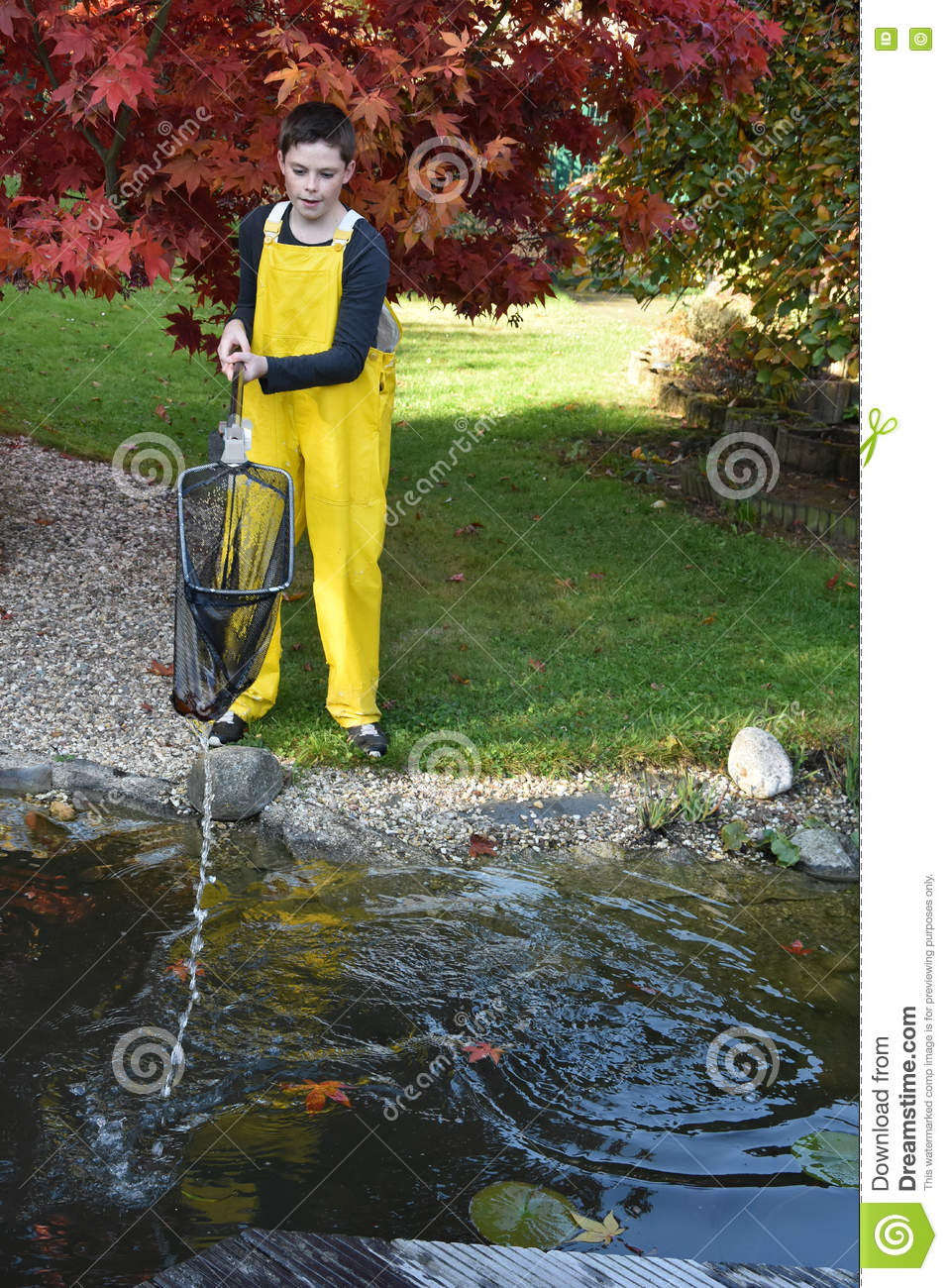 Boy cleaning garden pond stock photo image 79834915 for Garden pond cleaning