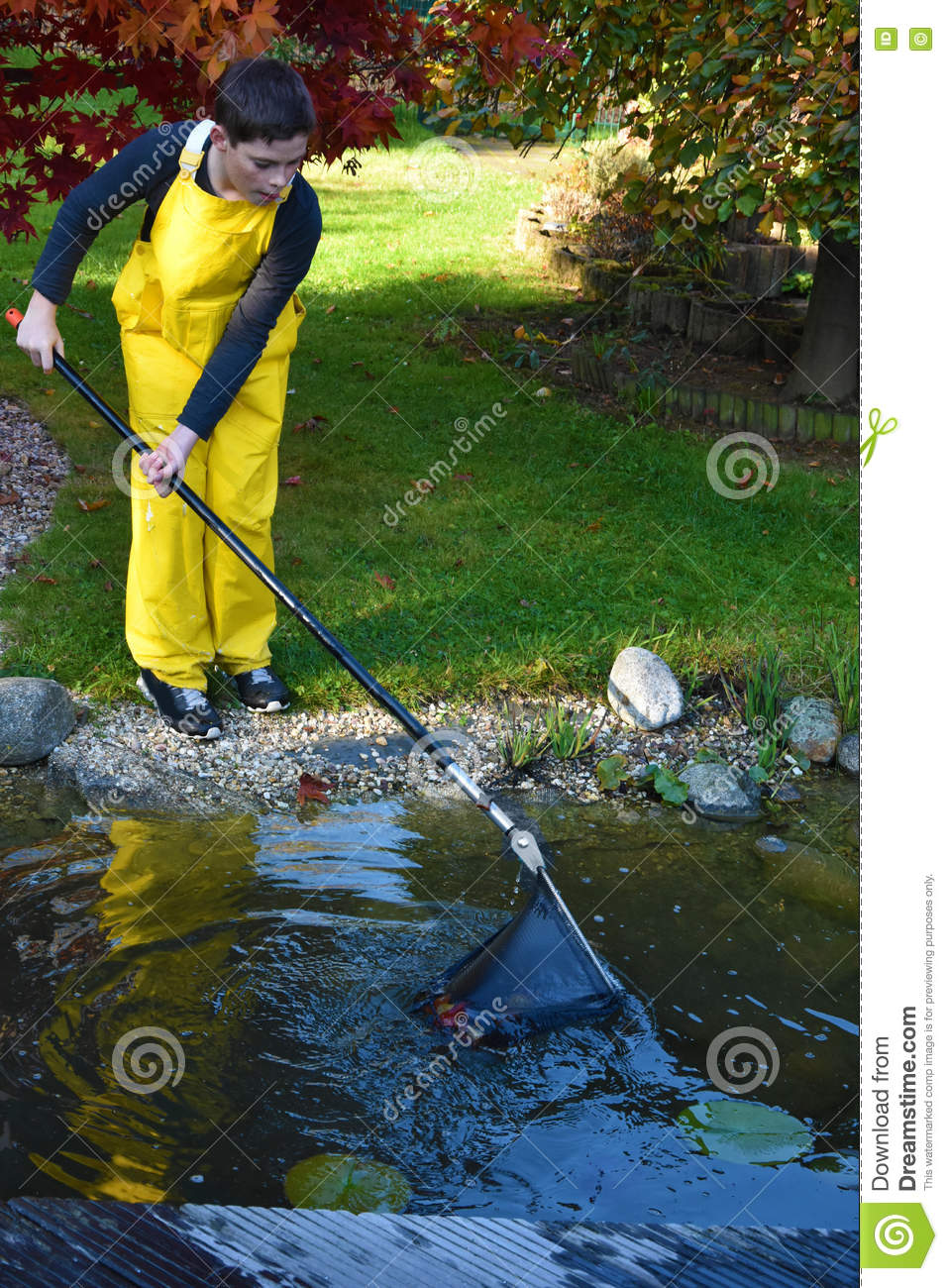 Boy cleaning garden pond stock photo image 79834919 for Garden pond cleaning