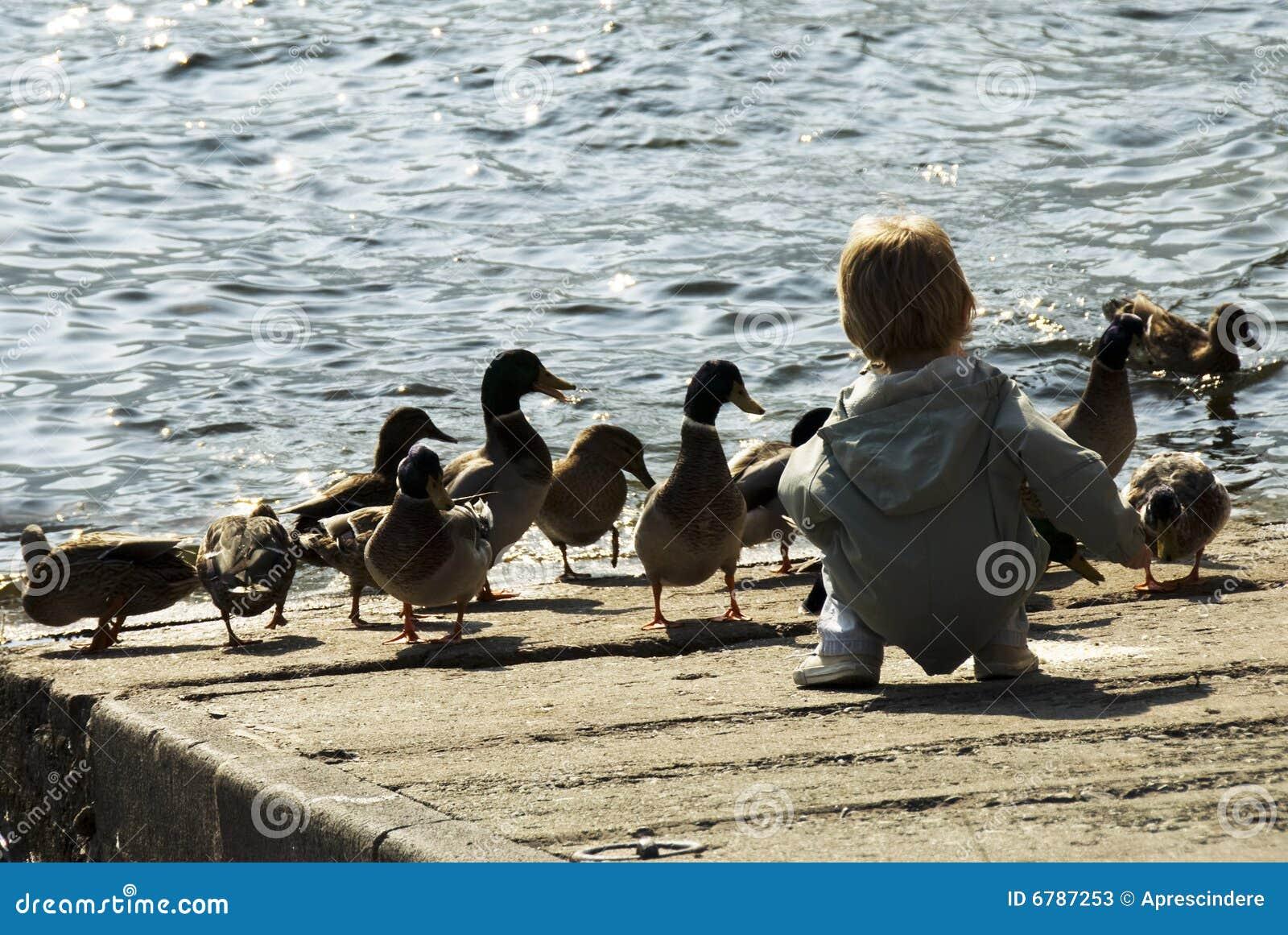 boy feeding ducks stock photos image 6787253 goose clipart spring geese clipart free
