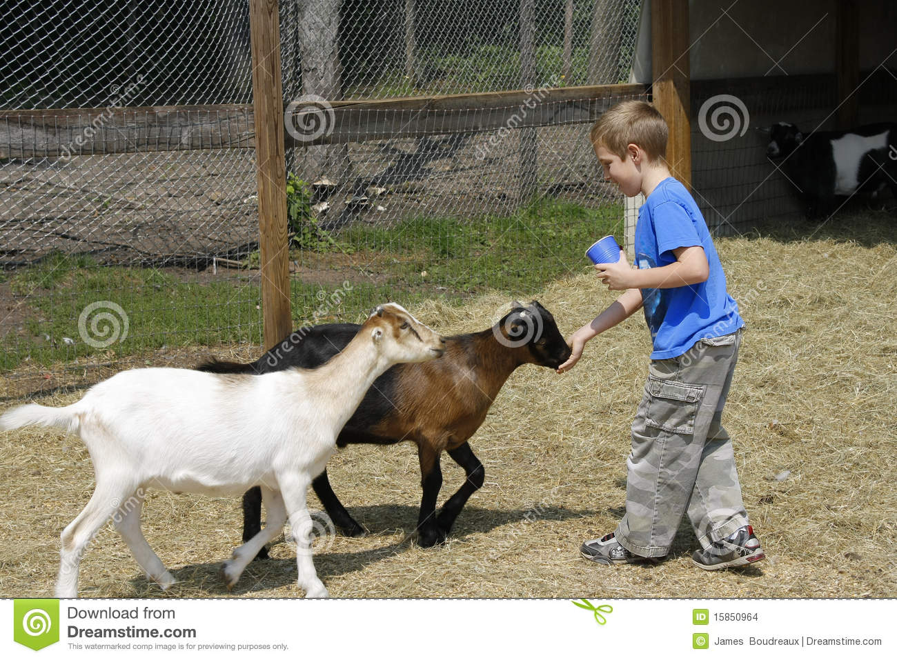 Boy Feeding Goats At The Zoo Stock Images Image 15850964