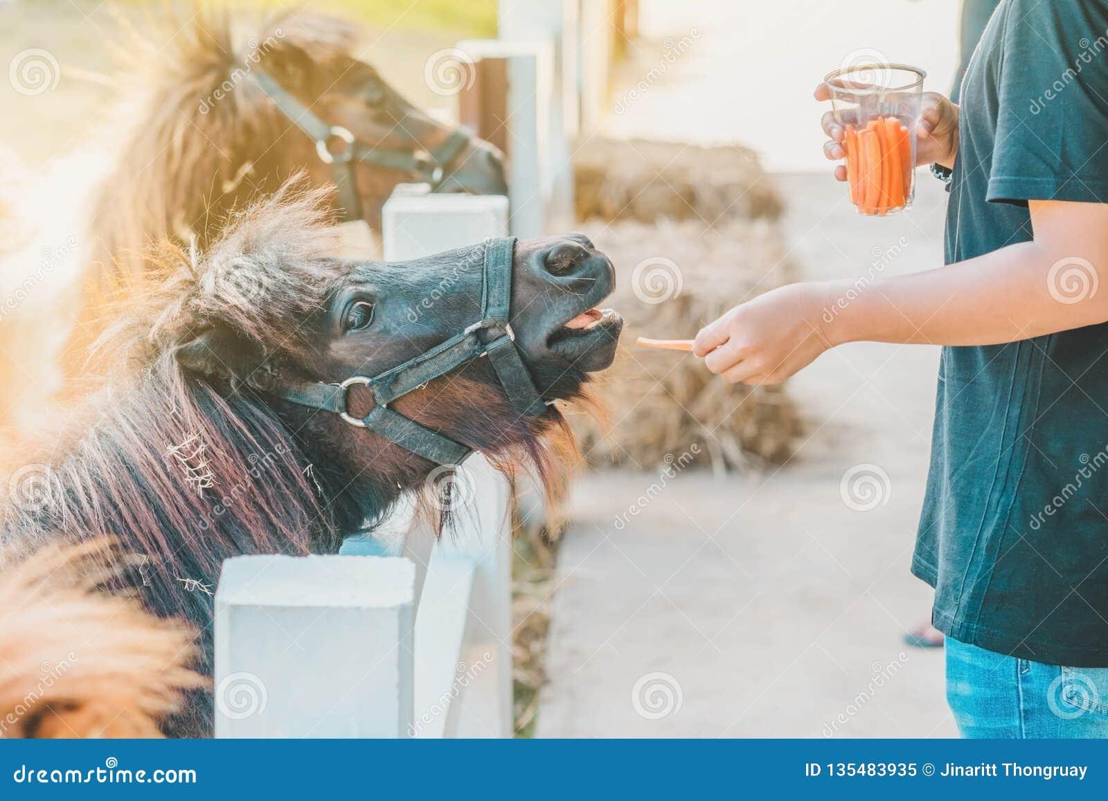 Boy feeding horse in his farm through a white fence