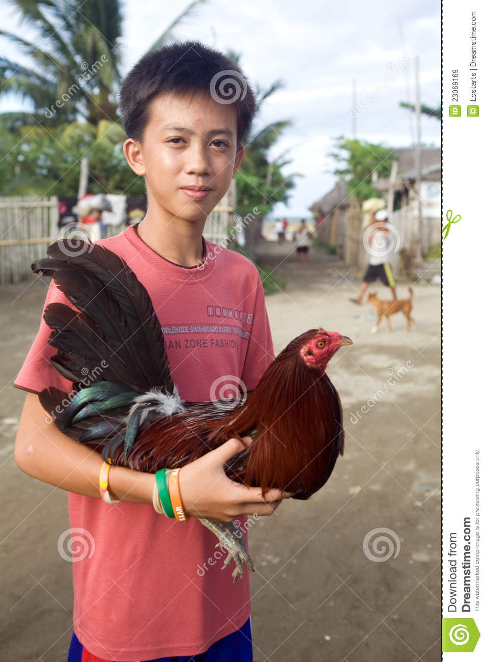 Filipino boy proudly carrying his pet fighting cock.