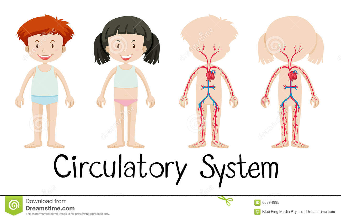 Boy and girl with circulatory system diagram stock vector boy and girl with circulatory system diagram pooptronica Choice Image