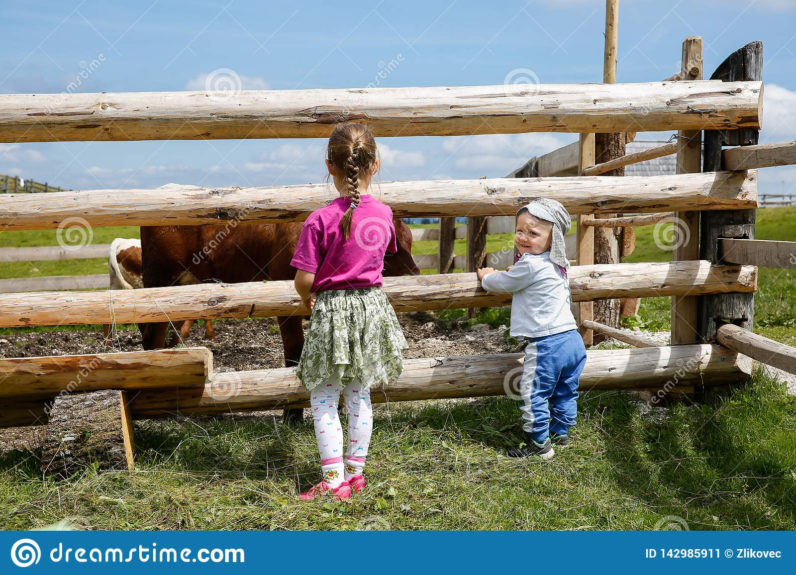 Boy and a girl enjoying outdoors, observing cows on a farm