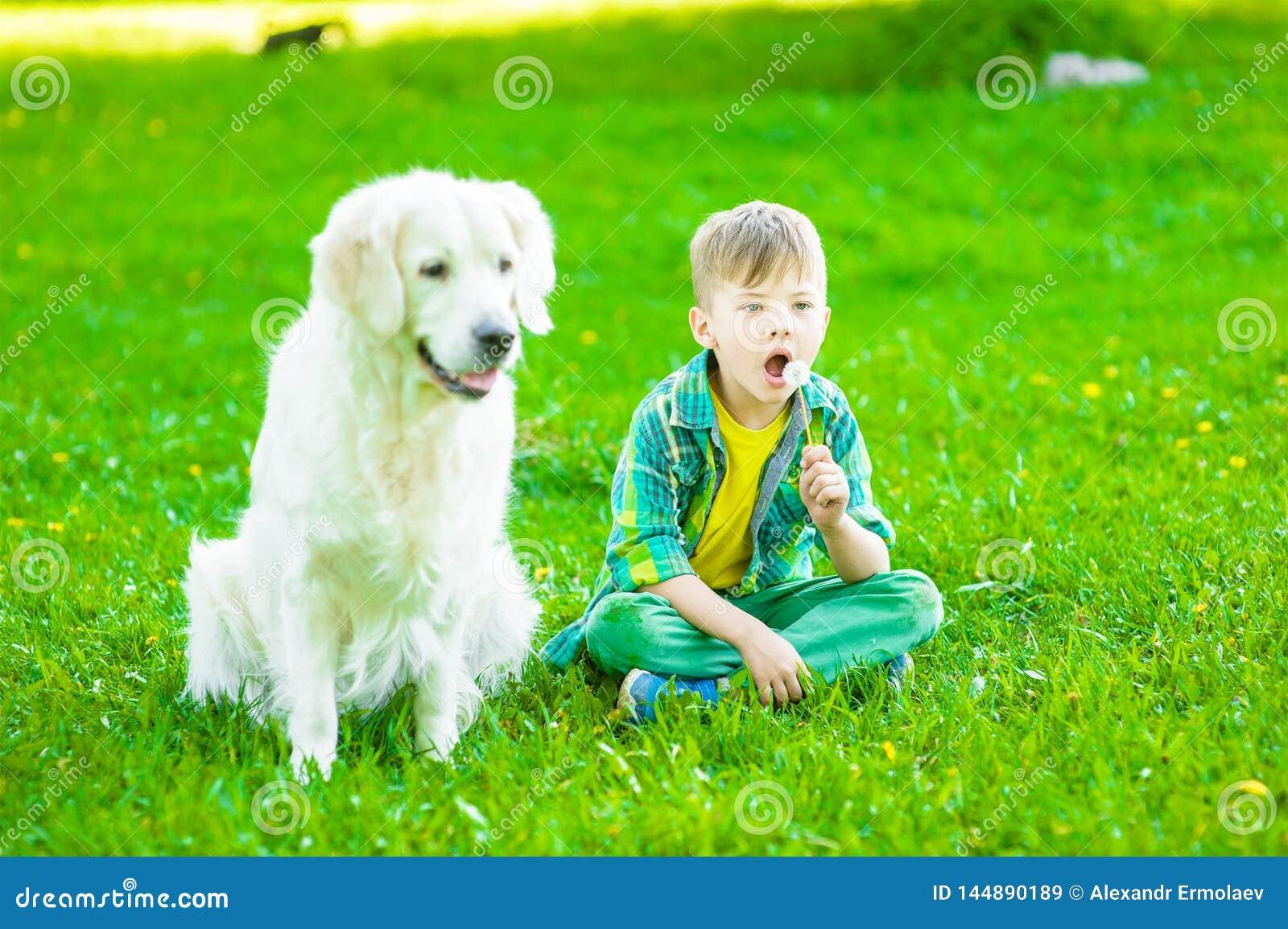 Boy with golden retriever dog blowing dandelion