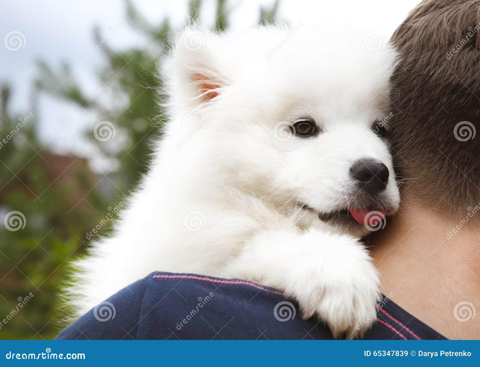 Boy Holding Samoyed Puppy In The Summer Garden Stock Photo