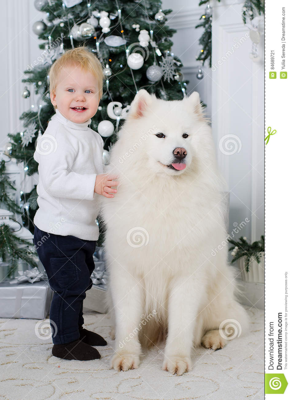 Boy Hugging A Big White Dog Stock Image - Image of happy, cheerful: 84689721