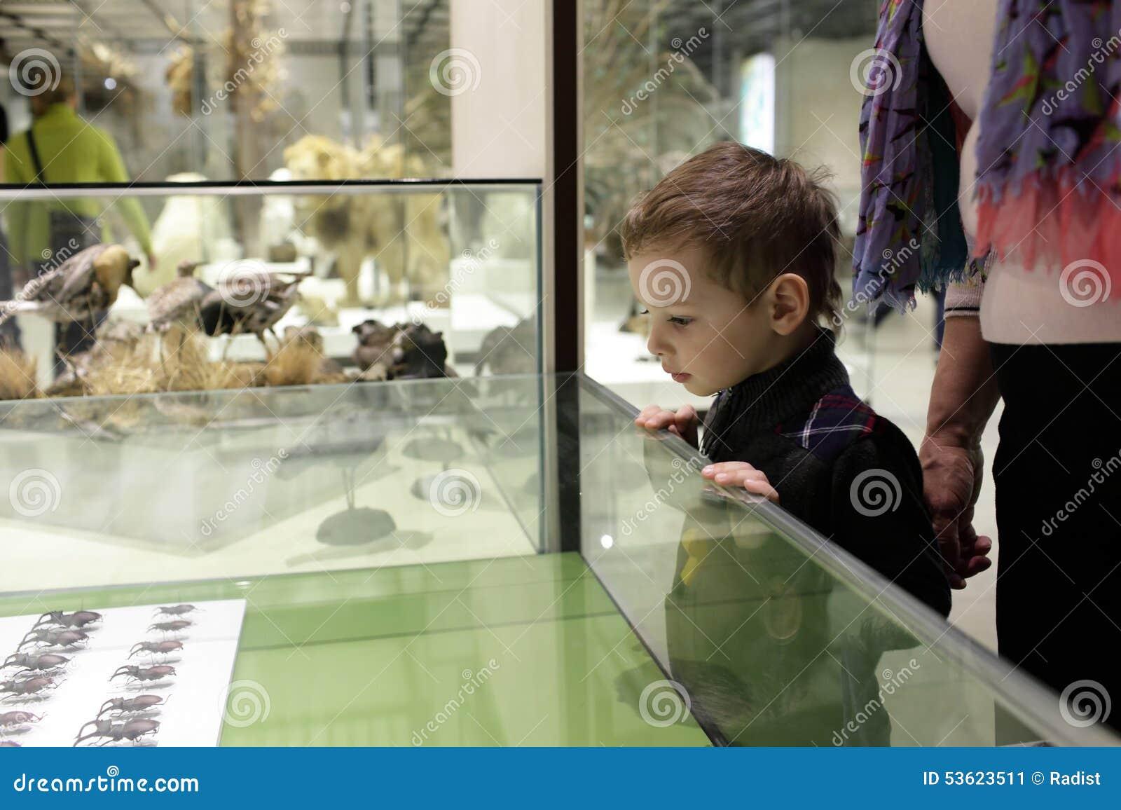 Boy looking at beetles