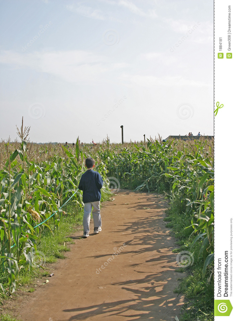 Boy Lost in Maize Maze in Cheshire Corn Field
