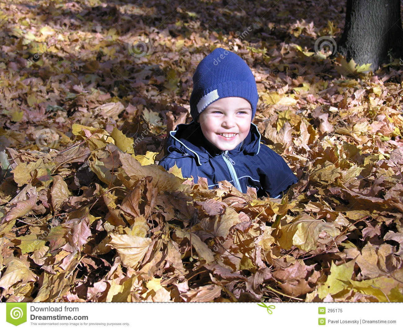 Boy in maple autumn leaves