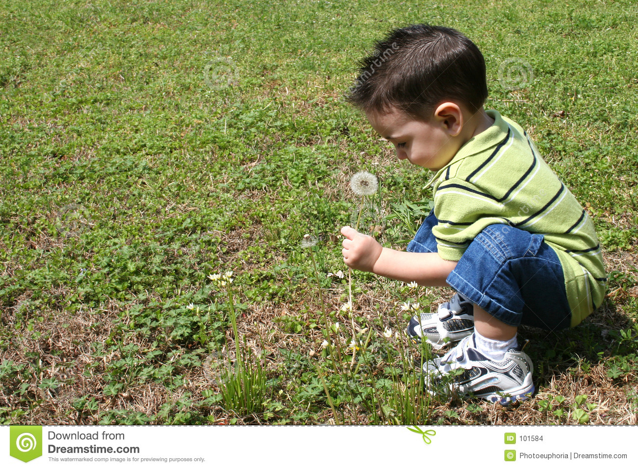 Boy Picking Dandelions From The Yard