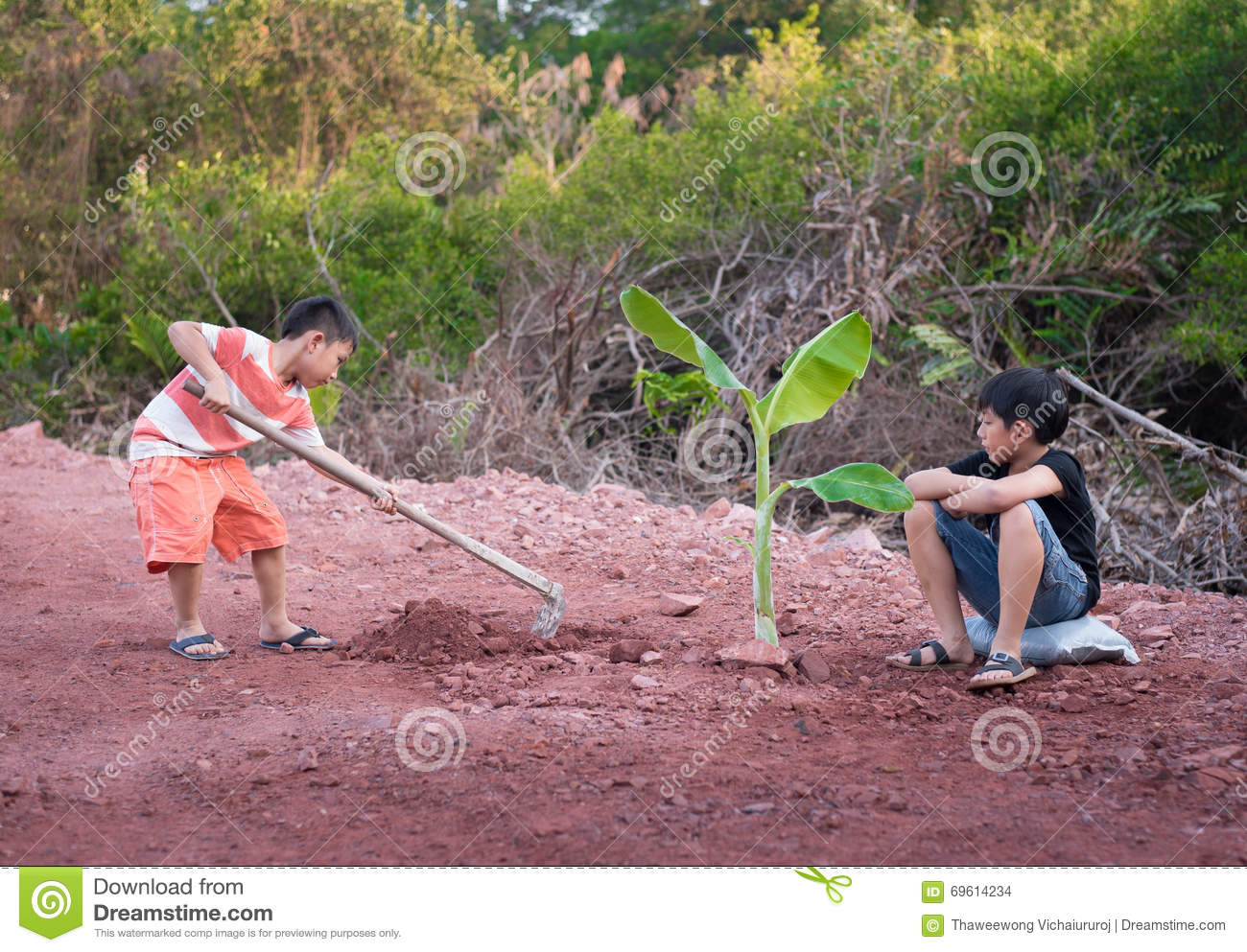 Boy plant tree stock photo image of banana summer for Digging ground dream meaning
