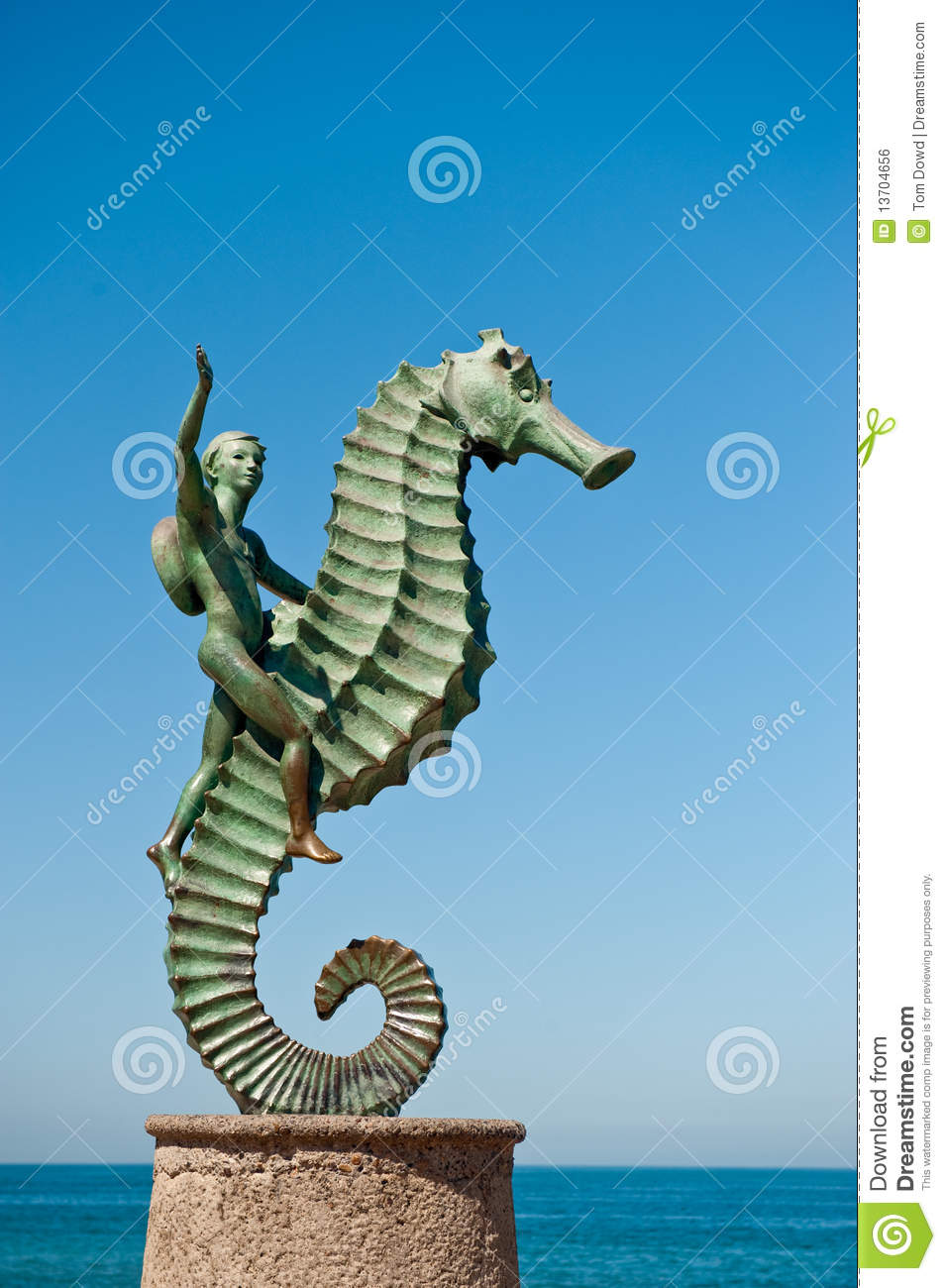 4 504 Seahorse Photos Free Royalty Free Stock Photos From Dreamstime