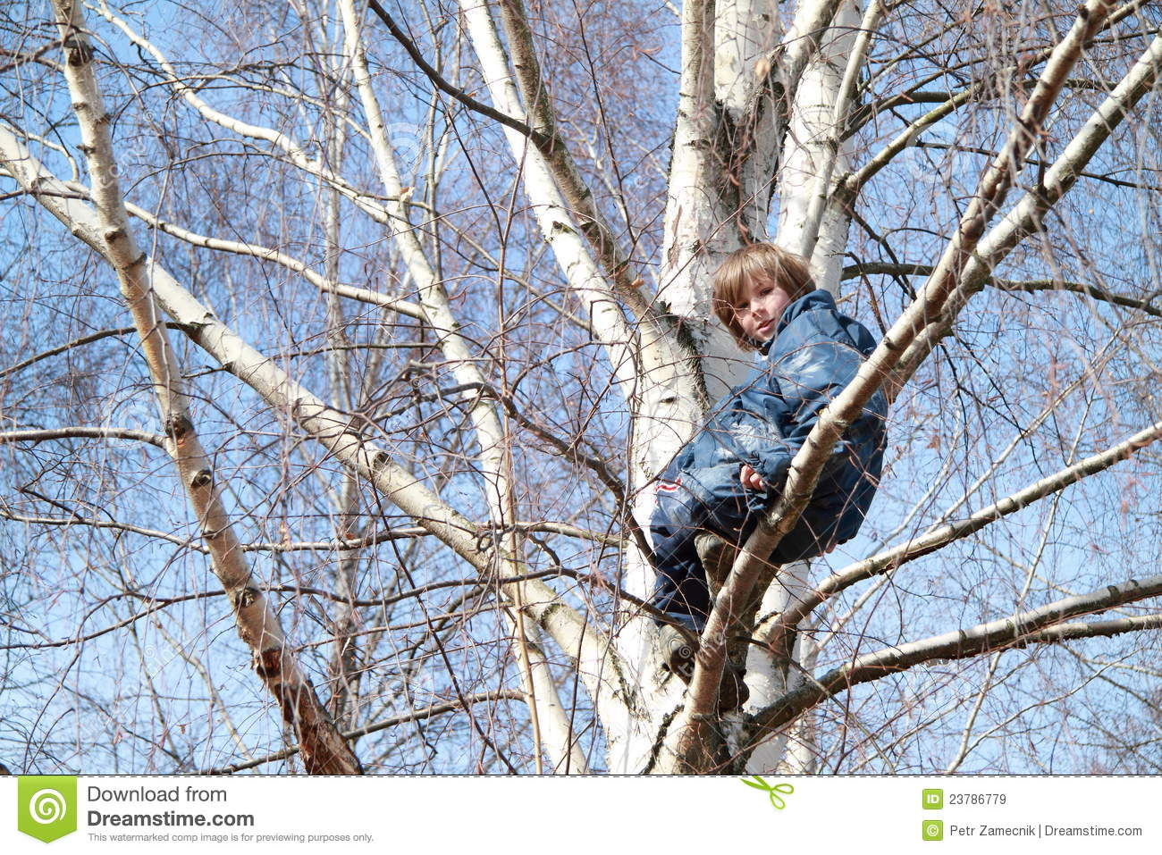 Boy Sitting On The Tree Royalty Free Stock Images Image