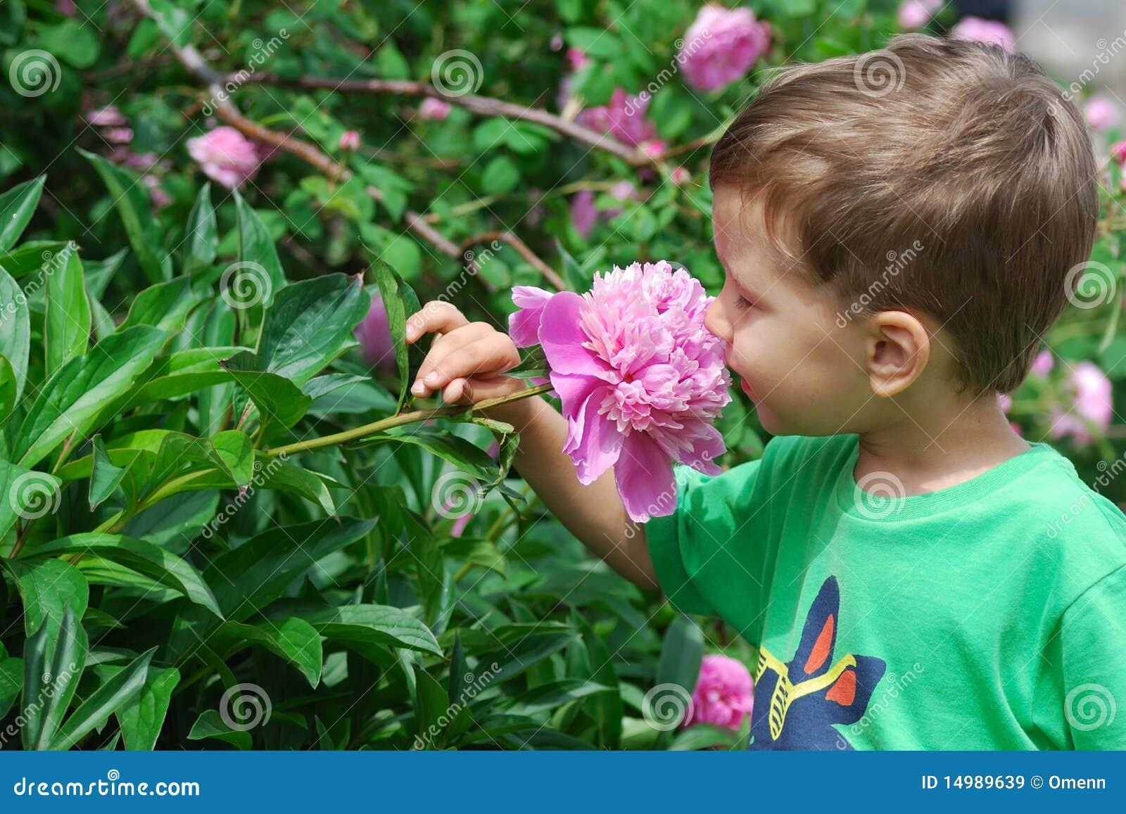 Boy smelling peony flower