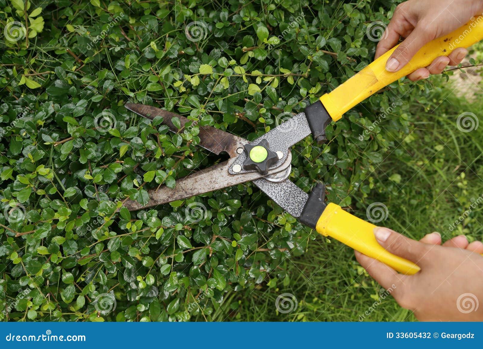 Brämbuskar med trädgårds- sax