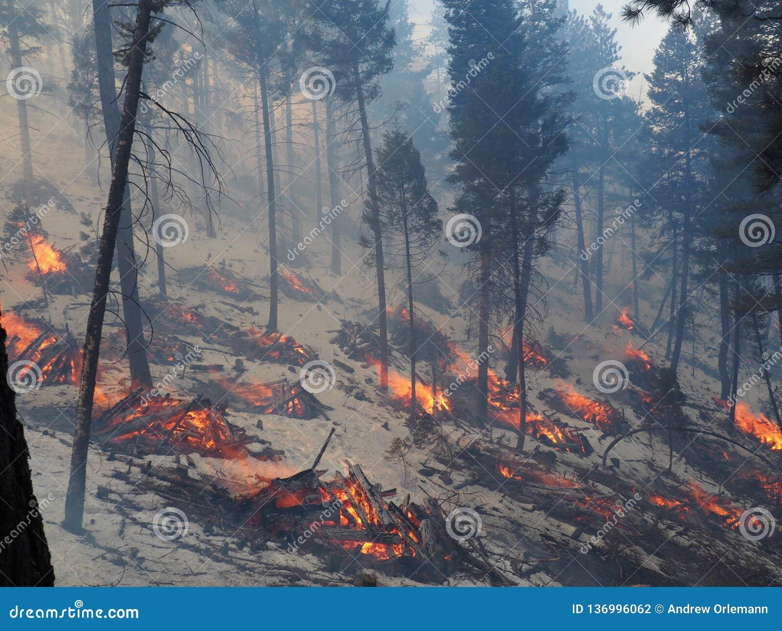 Brännande högar i skogen