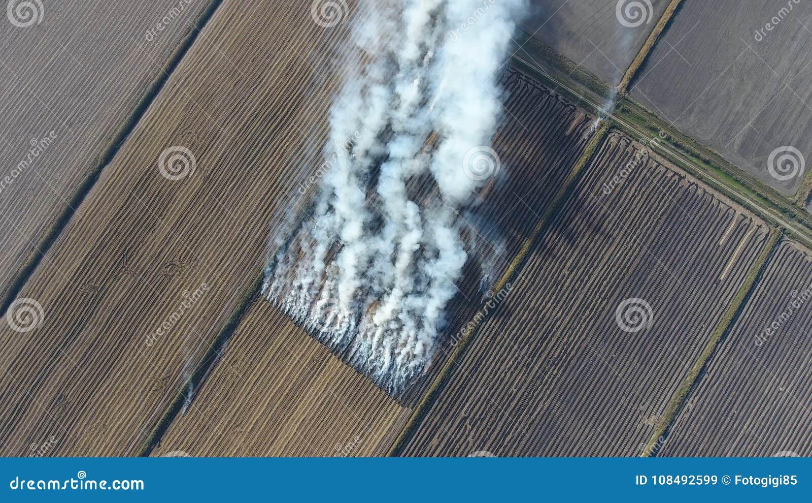 Bränningen av rissugrör i fälten Röka från bränningen av rissugrör i kontroller Brand på fältet