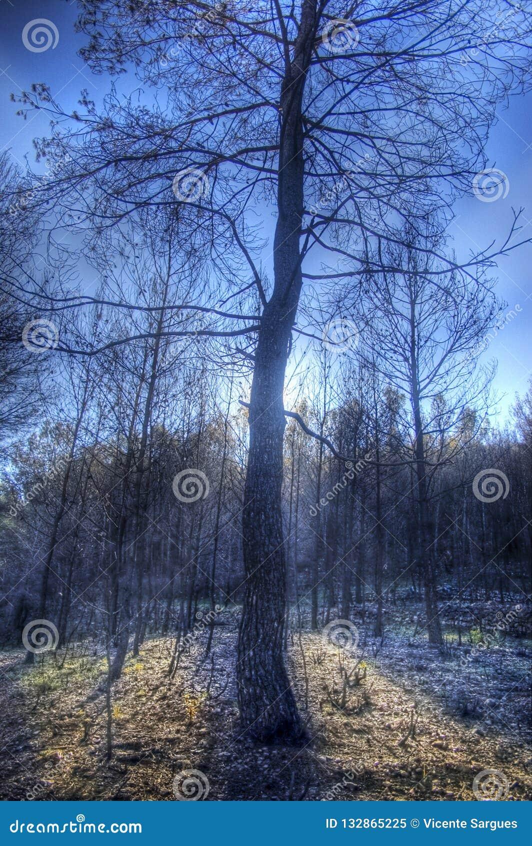 Bränt träd i tillbaka ljus