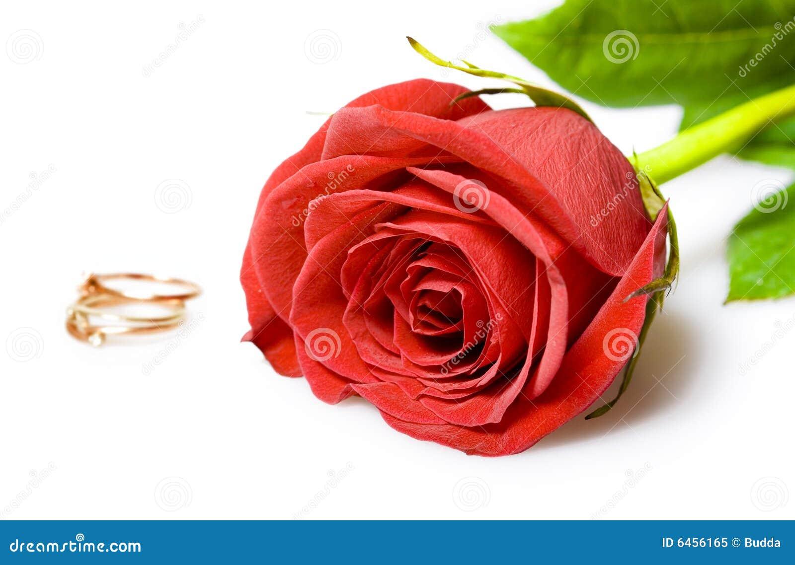 Bröllop för röda cirklar för guld rose