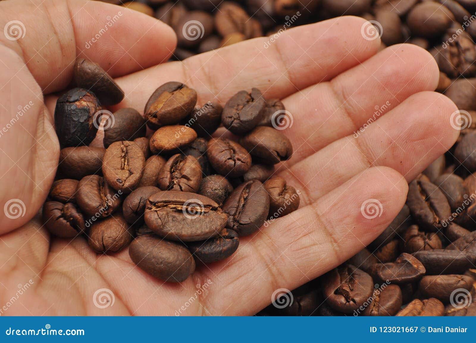 Brûleur de café