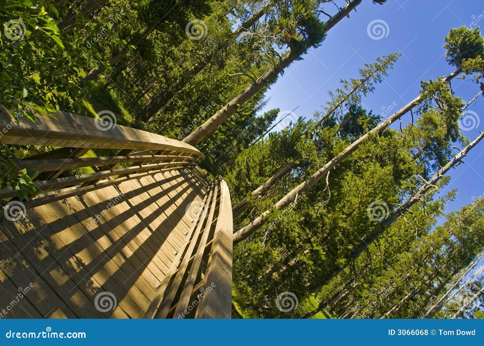 Brücke in die Wildnis