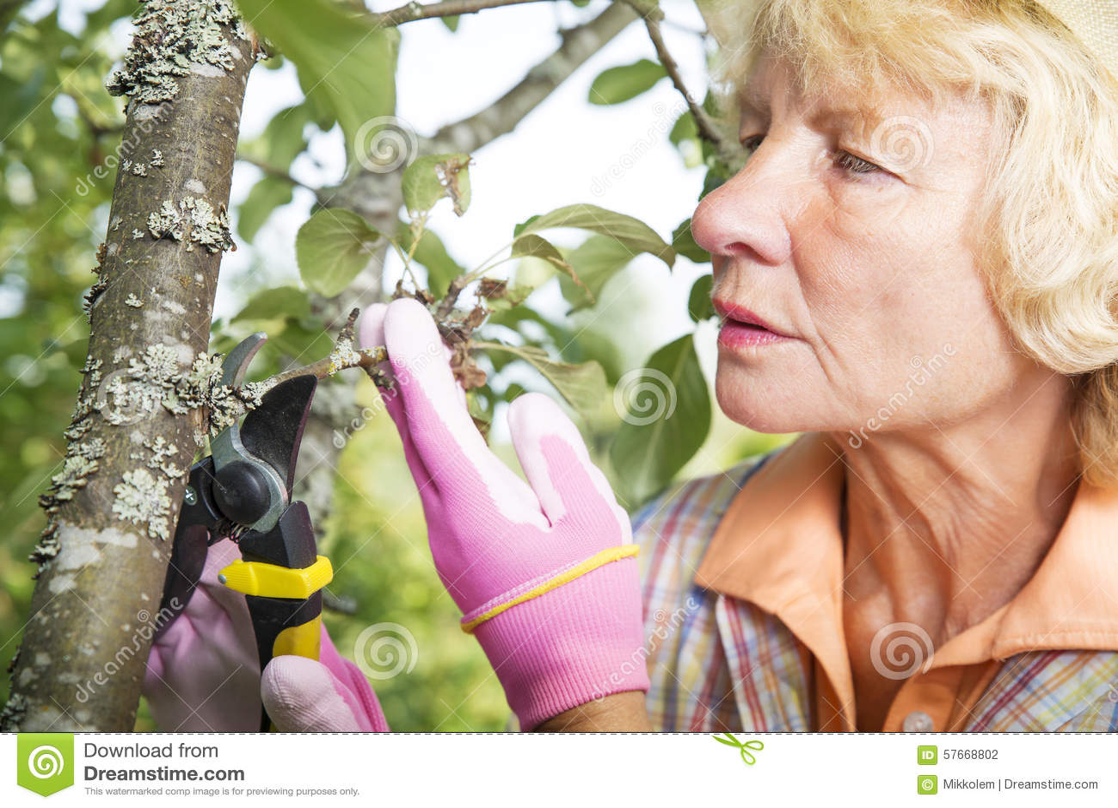 Brać opiekę jabłoń w podwórka ogródzie