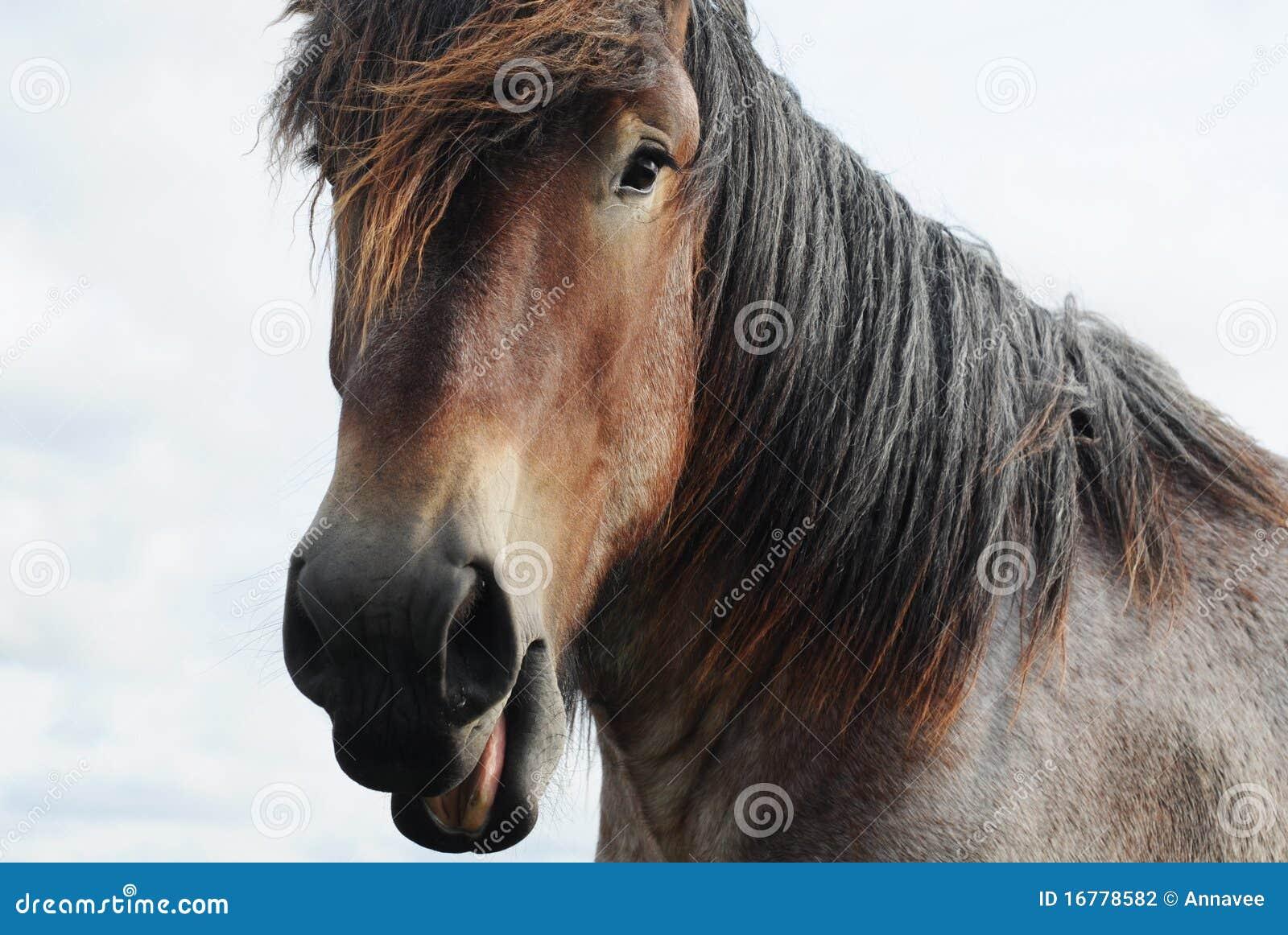 draft horse head profile