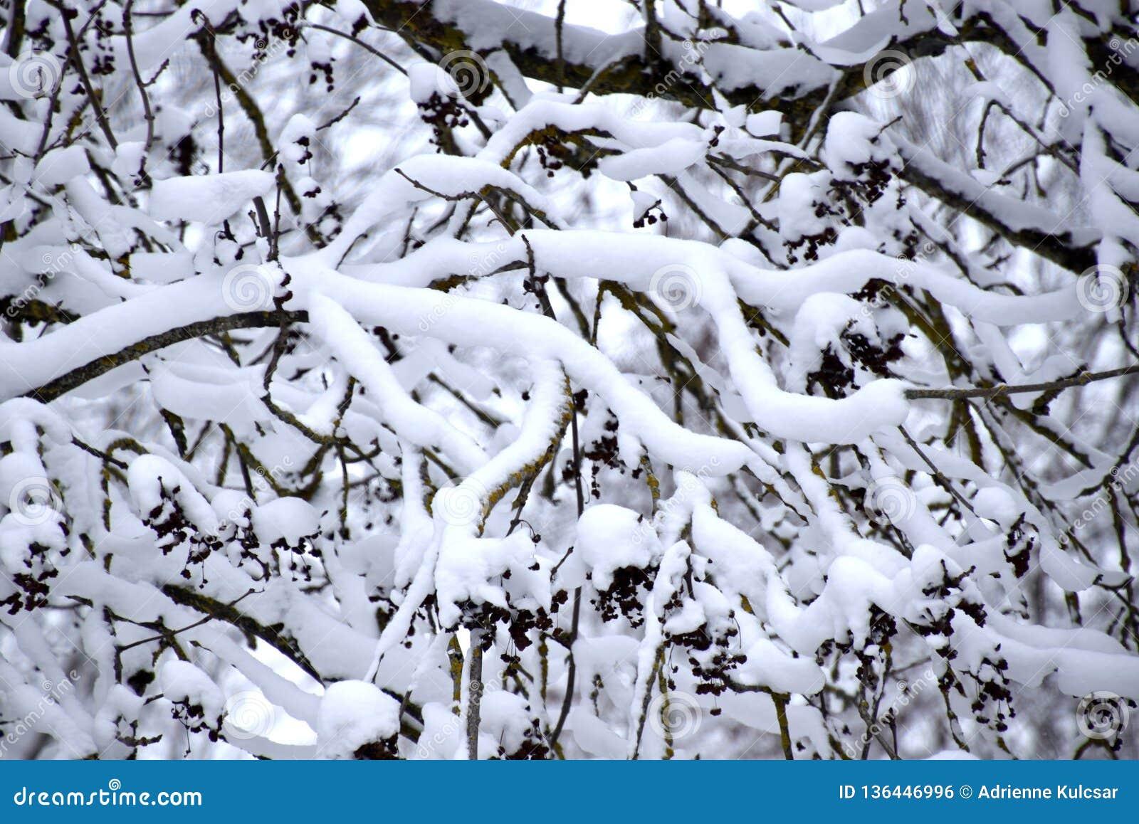 Brach cobriu com a neve, paisagem branca do inverno