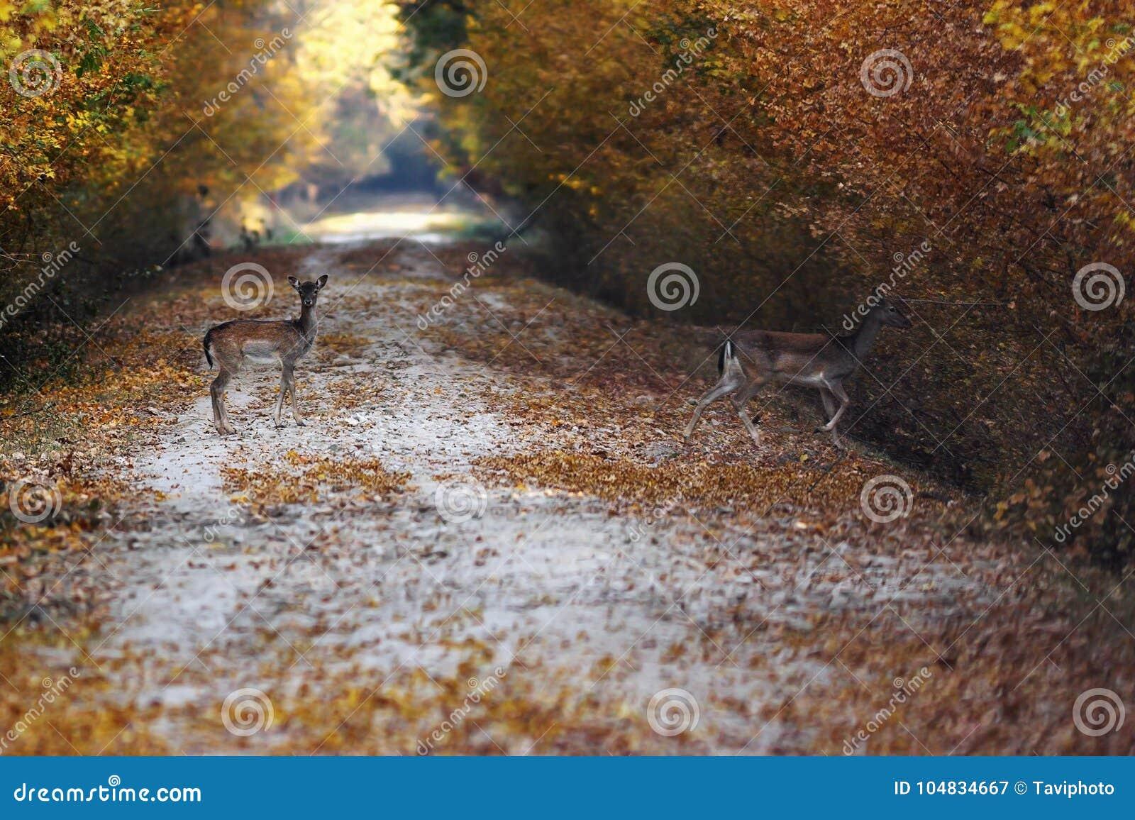 Bracherotwild, die Straße im Wald führen