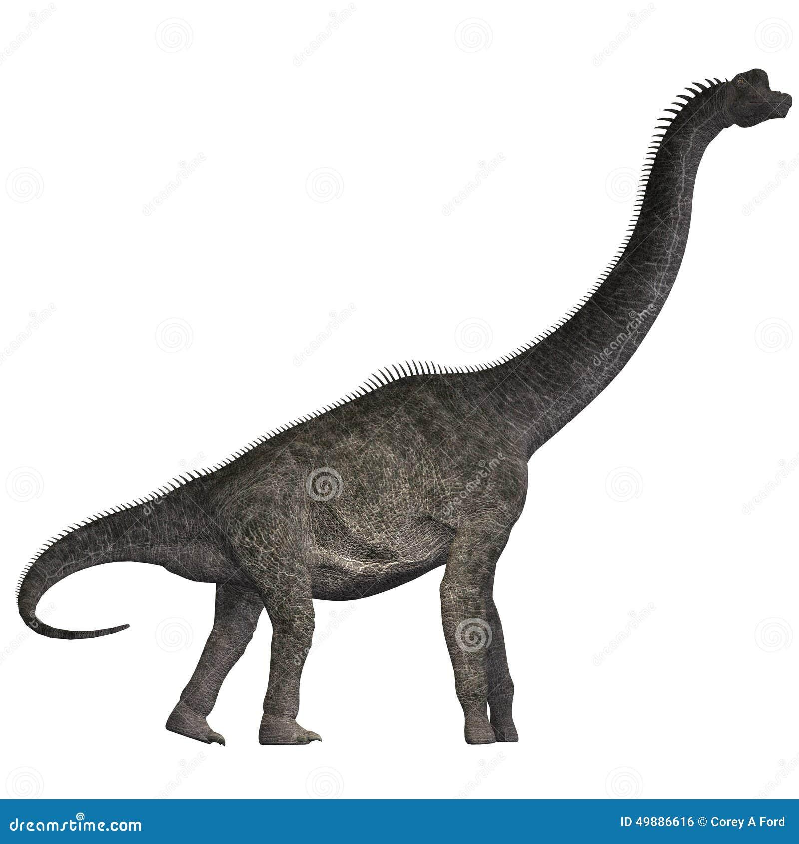 Brachiosaurus en blanco