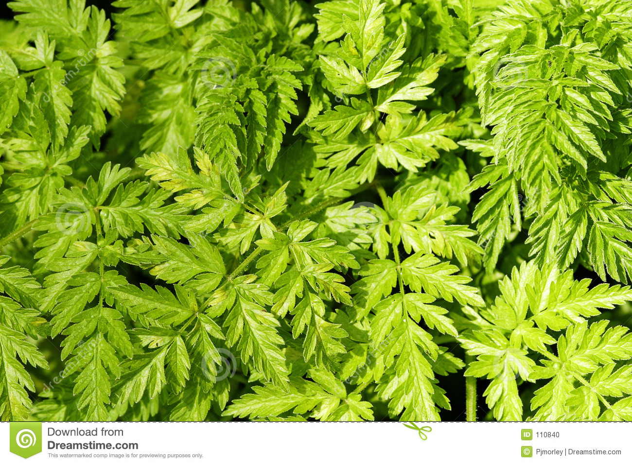 Bracken Background