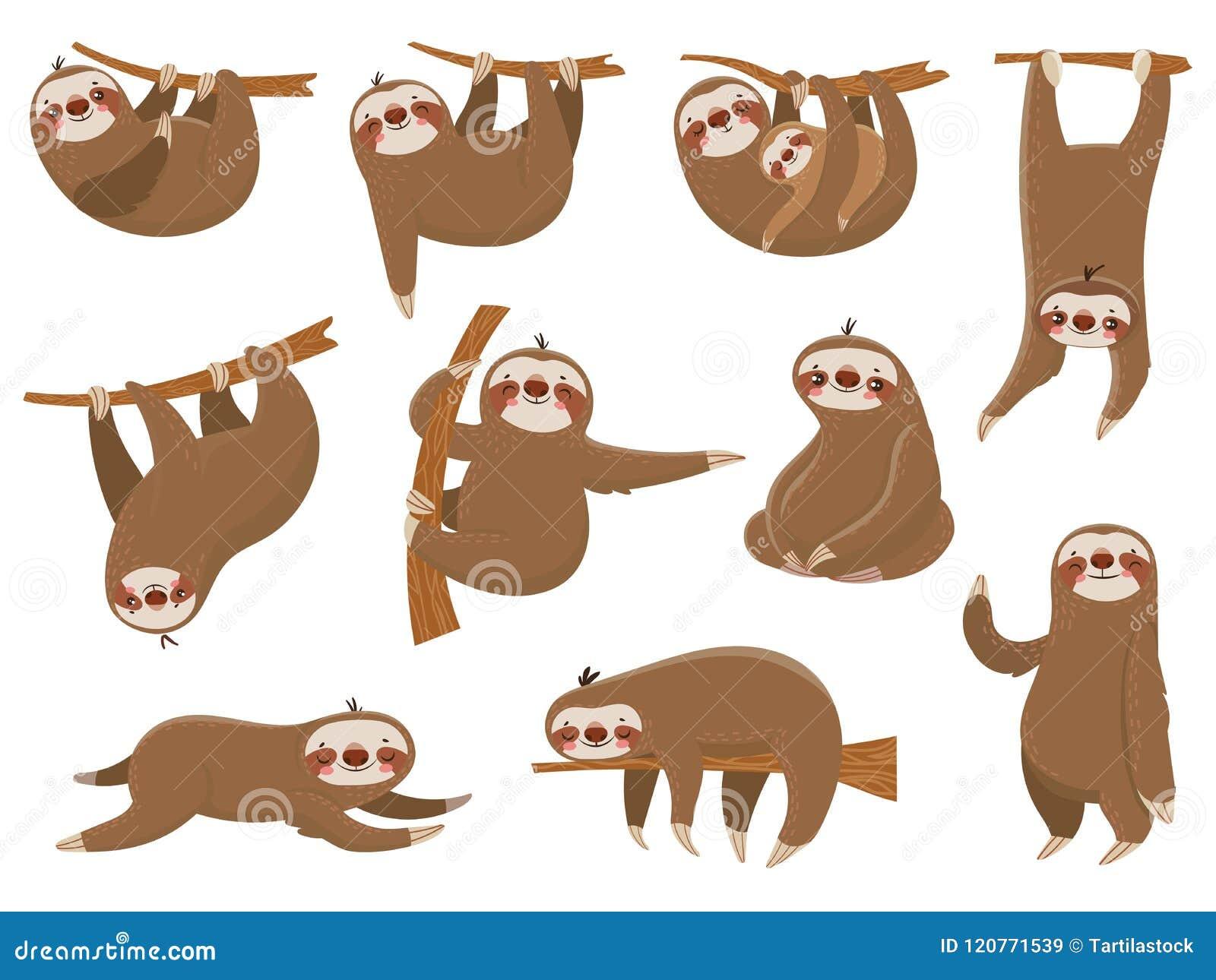 Bradipi svegli del fumetto Animali, madre e bambino adorabili della foresta pluviale sul ramo, animale divertente di bradipo che