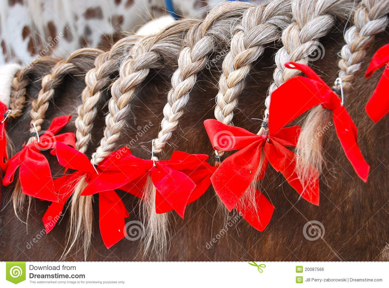 Braided Horse Mane With Red Bows Stock Photo - Image of farm