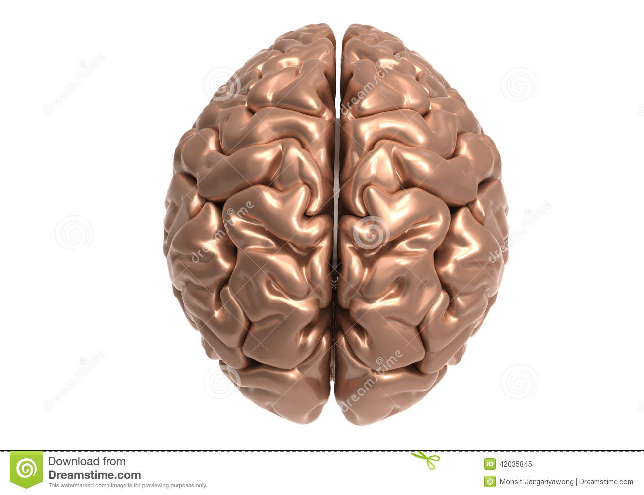 Brain with clipping mask stock illustration. Illustration of anatomy ...