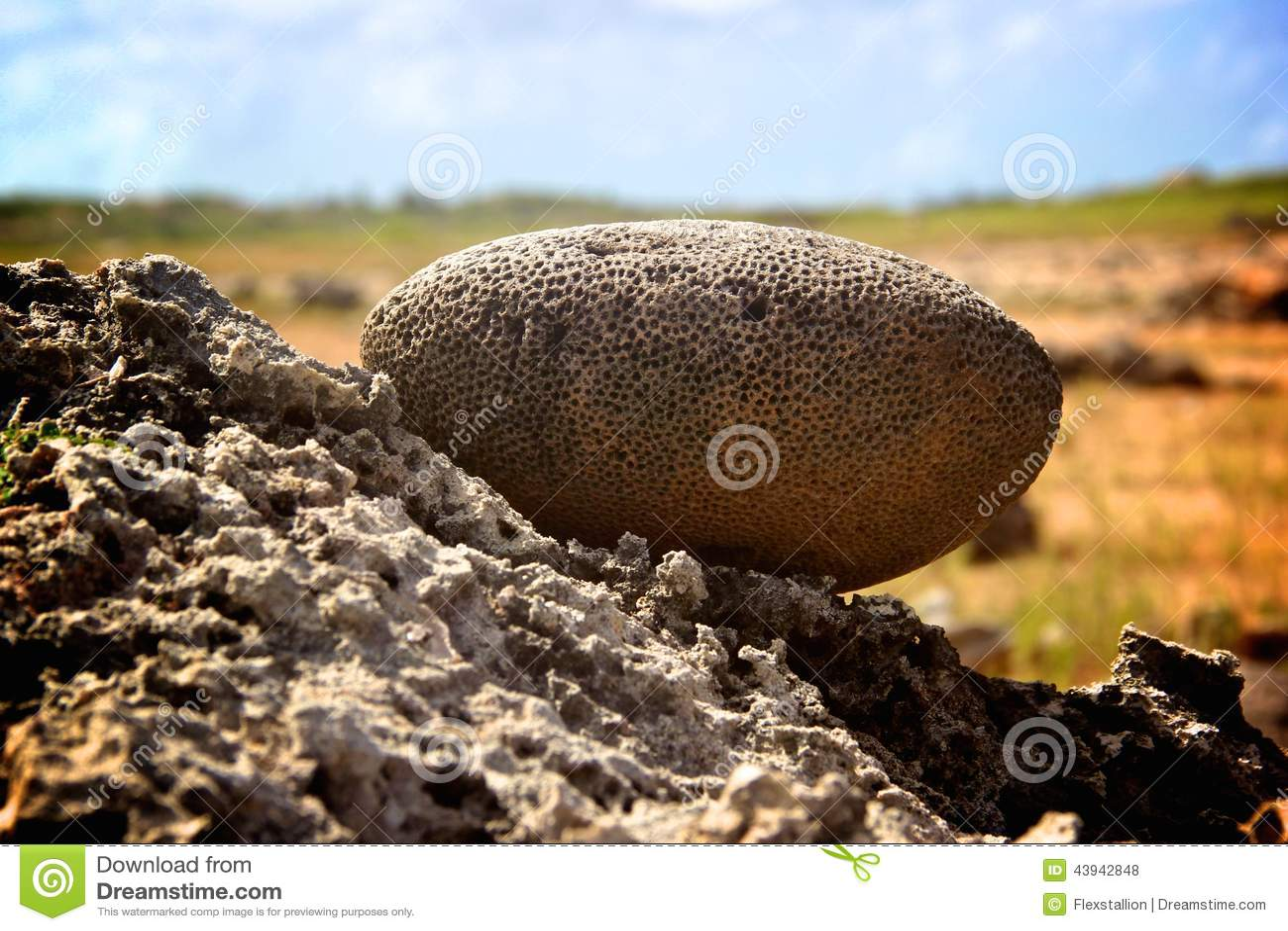 Brain Coral Near Wish Rock Garden-Aruba Stock Photo - Image of brain ...
