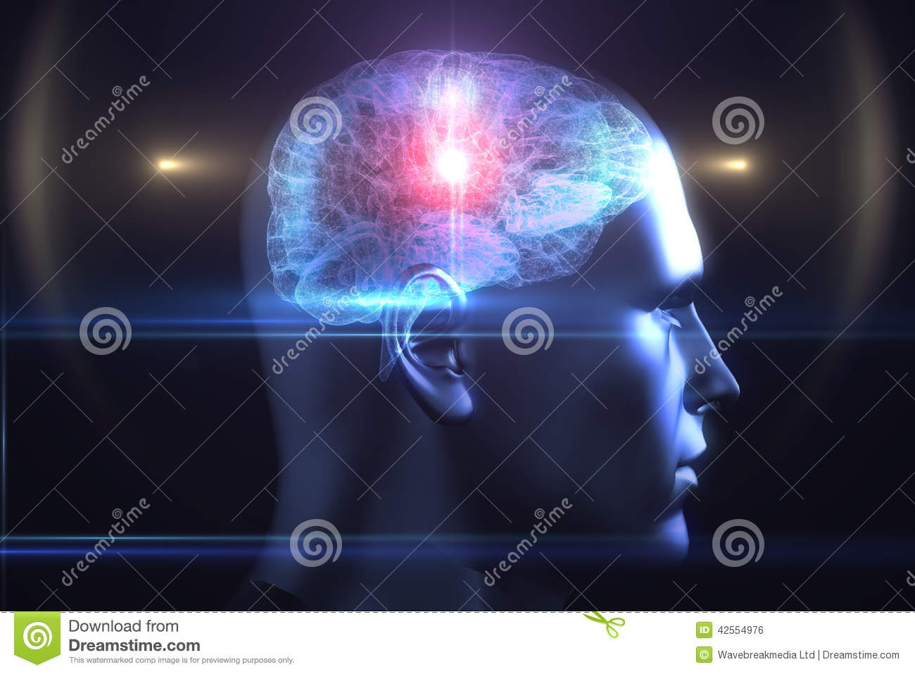 Brain Diagram In Human Head Stock Illustration