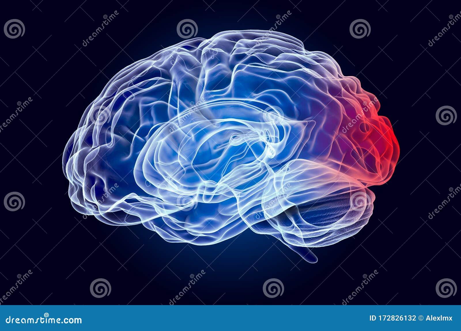 Brain, Disease Of Occipital Lobe Concept. 3D Rendering ...