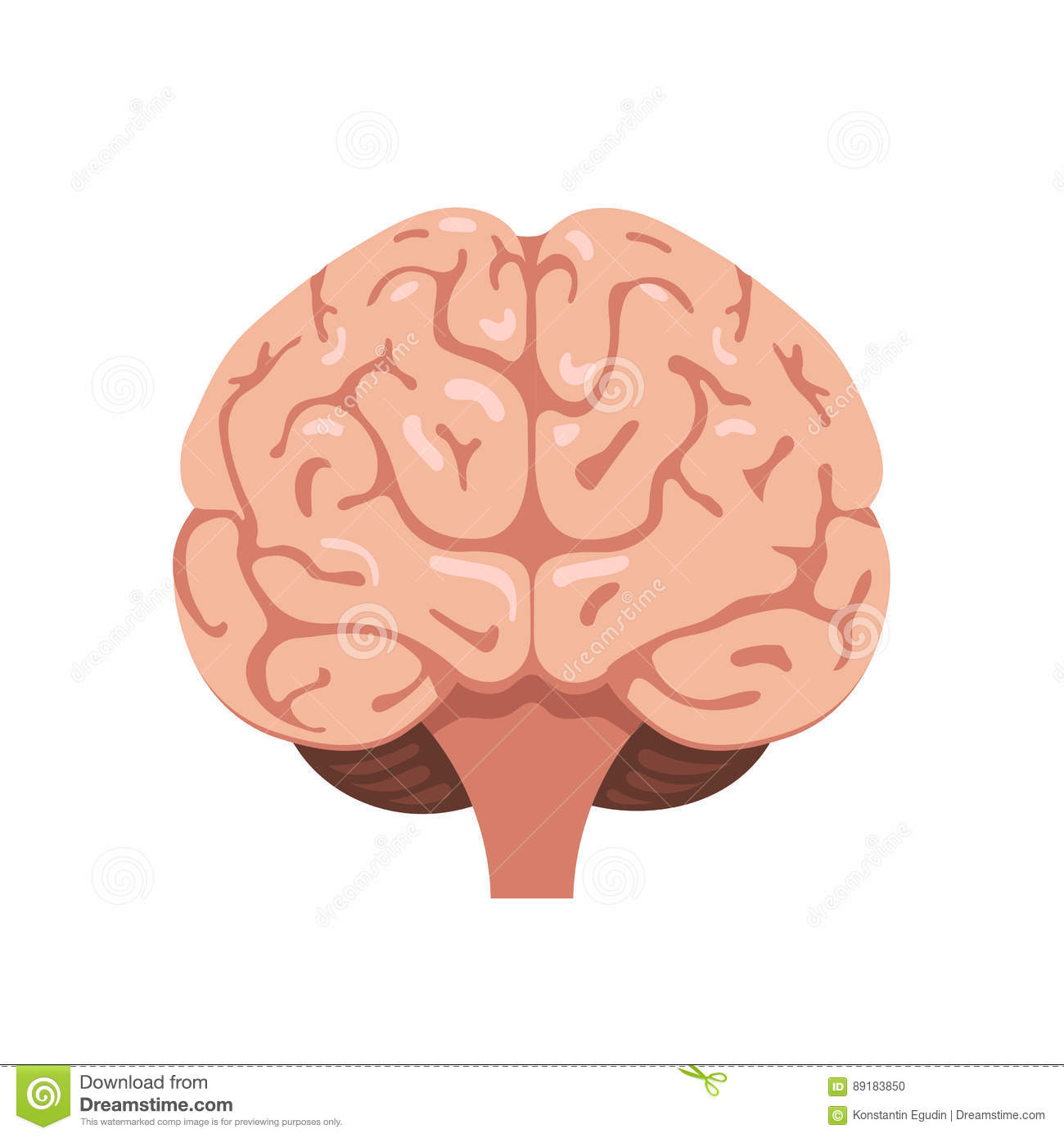 brain front view icon stock vector illustration of