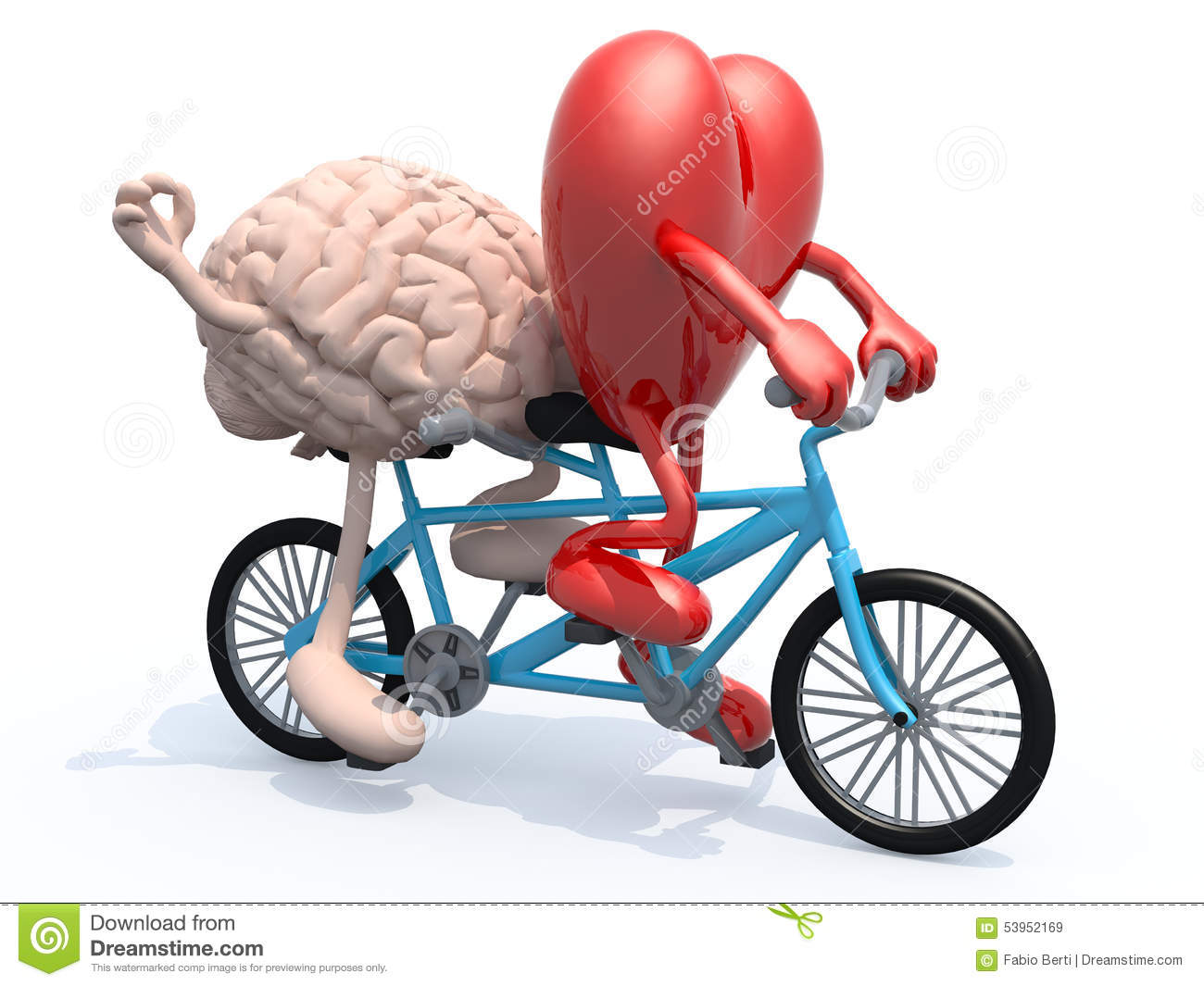 Human brain and heart with arms and legs riding tandem bicycle, 3d ...