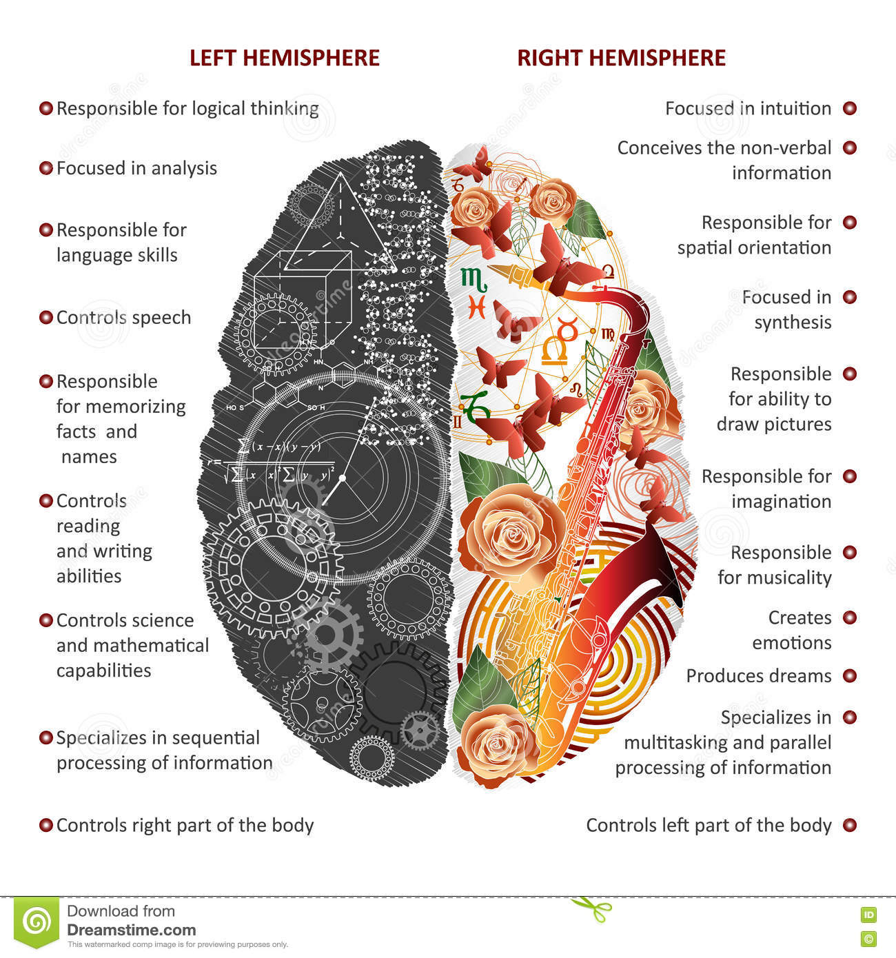 the left and right hemispheres And the left and right hemispheres are not the same they are highly similar and  redundant, though most processes that you'd find on the left.